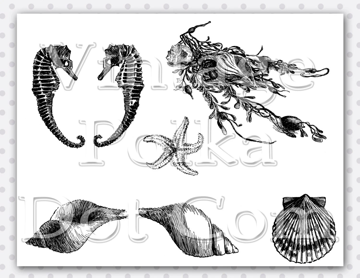 Seashell Clip Art Vintage Ocean Collage Sea Horses Starfish
