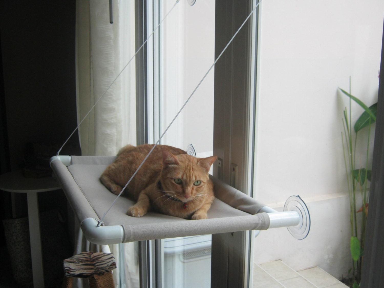 Hammock Style Cat Window Perch Star Coin Bank
