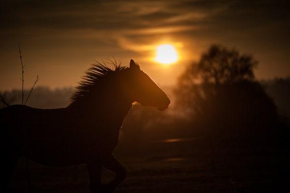 Horses Running Sunset