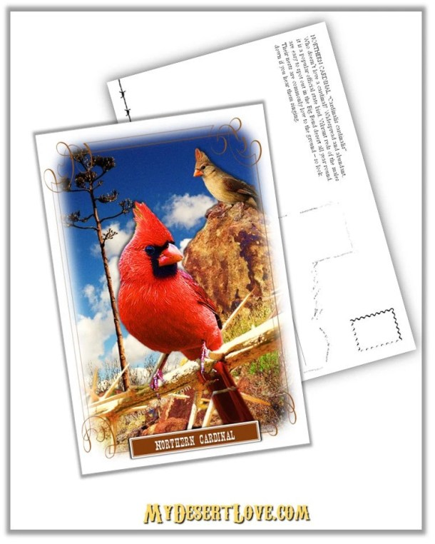 Northern Cardinal, Red Bi...