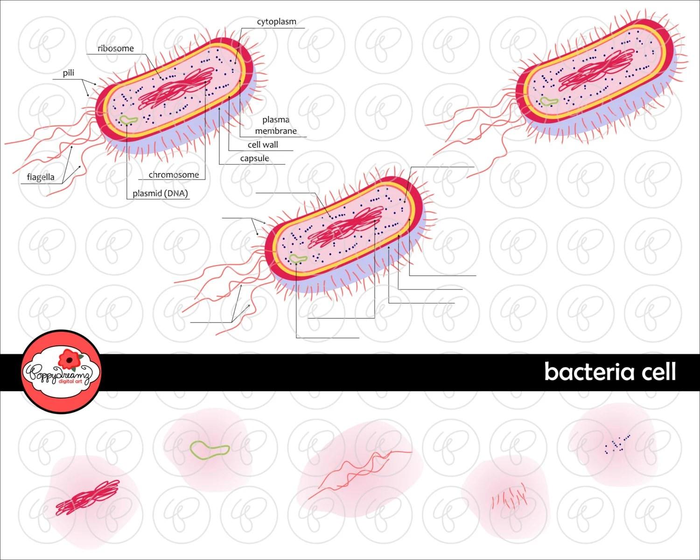 Bacteria Cell Science Diagram Clipart Set 300 Dpi School