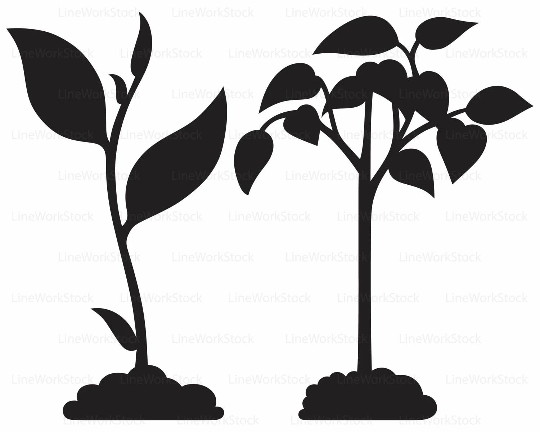 Plant Svg Leaves Clipart Plant Svg Plant Silhouette Leaf