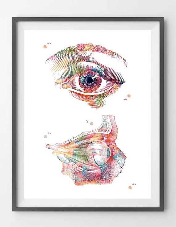 Eye anatomy watercolor print eye poster ophthalmology art