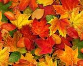 Fall foliage, Autumn Leav...