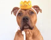 Dog Crown, Crown for Dogs...