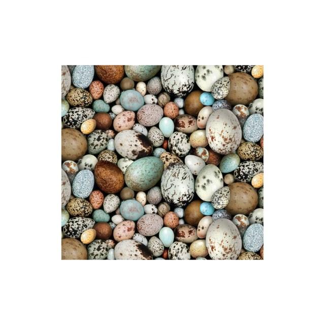 Bird Eggs, Speckled Eggs,...