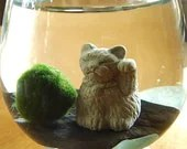 "LUCKY Sale DIY KIT Marimo Balls & Lucky Cat Terrarium ""Double Lucky"""