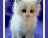 Lavender Cat - Leave in Coat Conditioner