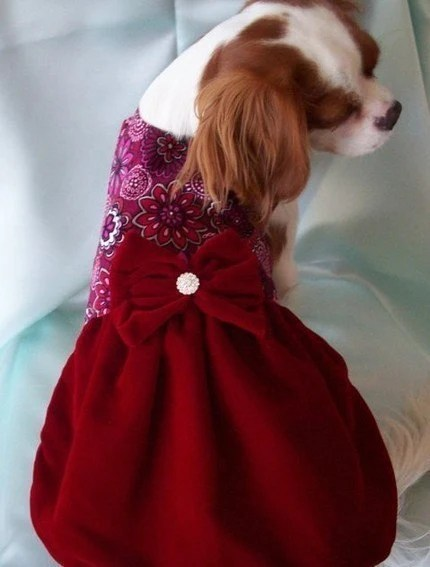 Red Velvet Dog Dress dog dress holiday Christmas dog dress