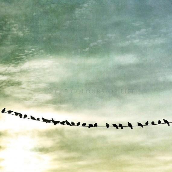 Birds, birds photography, birds silouhettes, pole, fine art nature photography