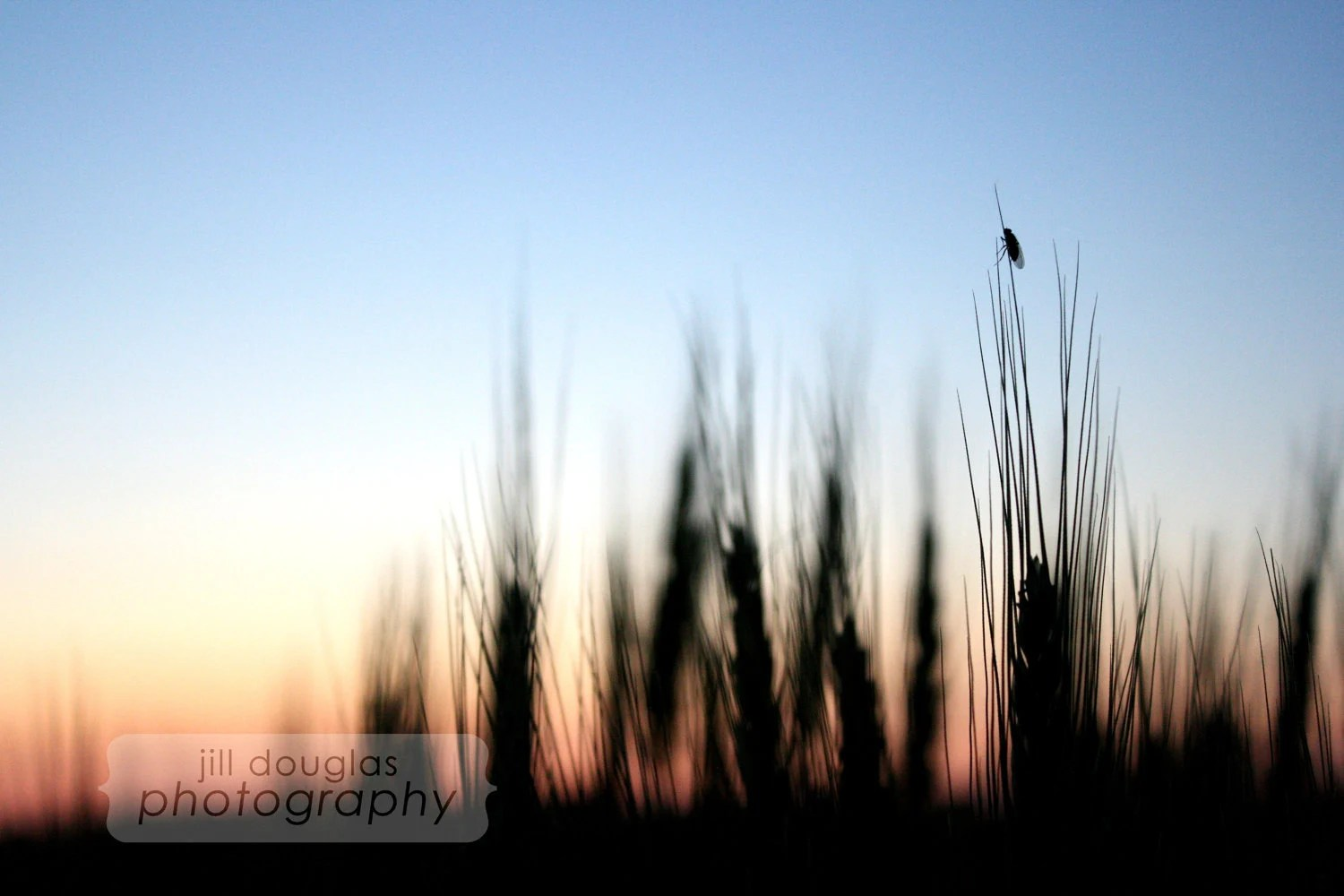 "Photography Print ""The Sinking Sun"" 8x10"", Matted"