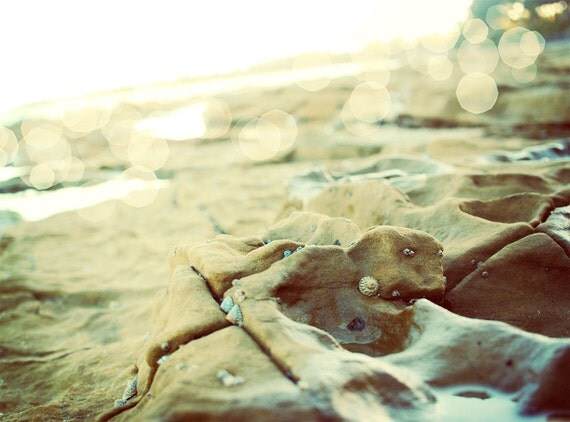 "She Sells Sea Shells - Australian Getaway - Fine Art Nature Photography 8x10"" - happeemonkee"