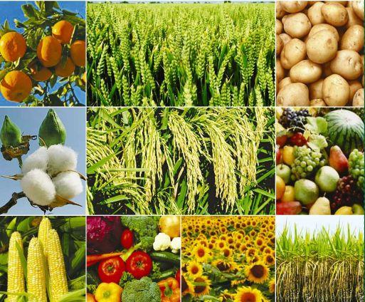 https://i1.wp.com/img1.exportersindia.com/product_images/bc-full/dir_35/1024438/bio-fertilizers-1681389.jpg