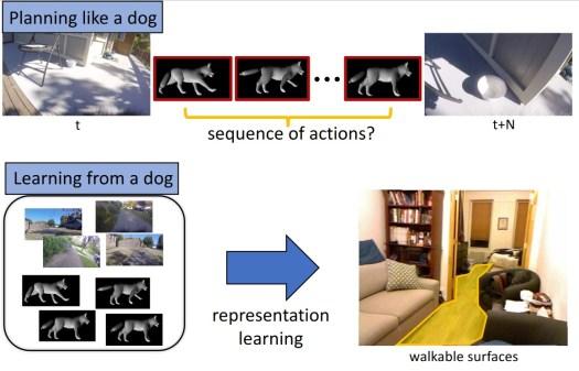 IA cachorro