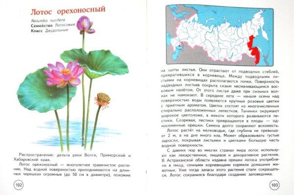 немыслимое правило: описание и фото растений из красной книги