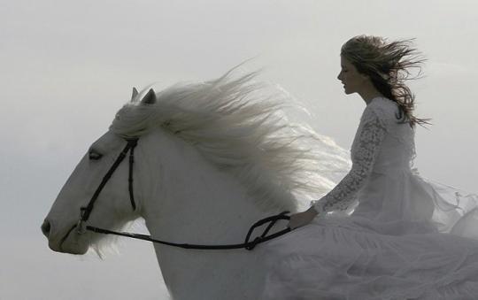 Красивые фотографии лошадей: мой единорог еще пасется