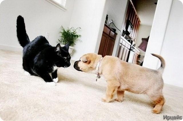 Web mjesto za upoznavanje luda mačka