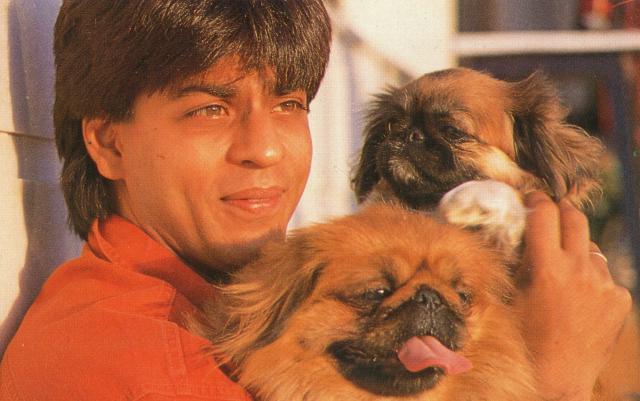 Image result for shahrukh khan dog