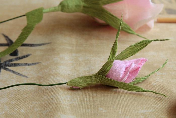 розы из гофрированной бумаги. мастер-класс (31) (699x468, 94Kb)