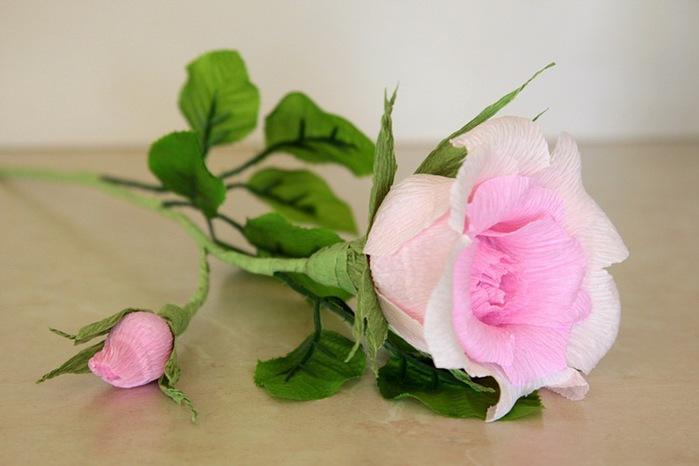 розы из гофрированной бумаги. мастер-класс (33) (699x466, 65Kb)