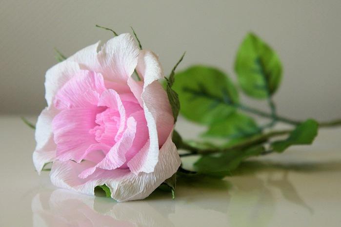 розы из гофрированной бумаги. мастер-класс (35) (699x467, 60Kb)