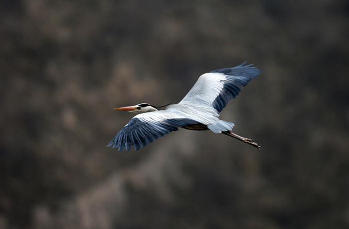 Китай. Прекрасные птицы на реке Хуанхэ