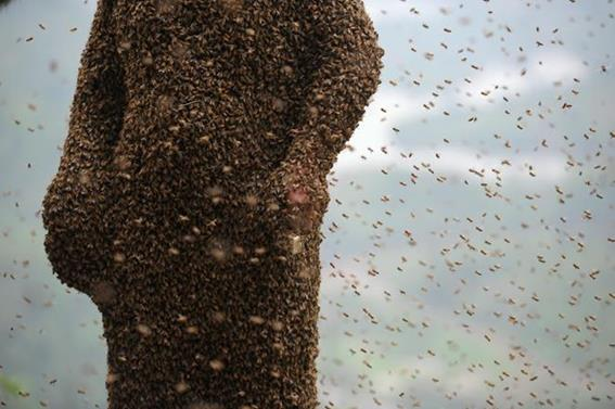 Китаец установил рекорд с 460 тысячами пчел и минимумом укусов