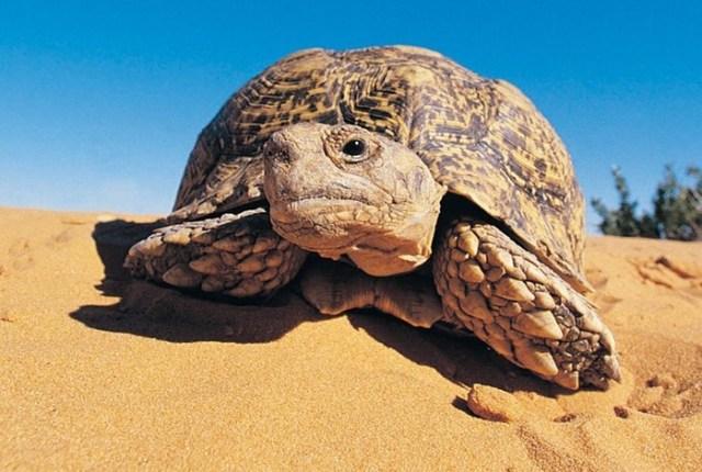Животные долгожители: каким животным сотни лет?