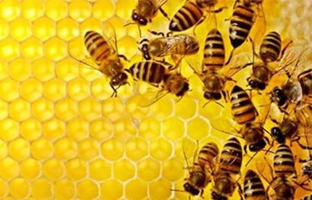 Сколько всего пчел в одном улье? Колония пчел