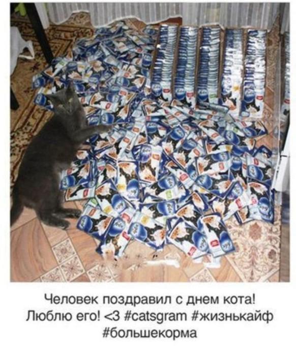Как бы выглядел кошачий инстаграм