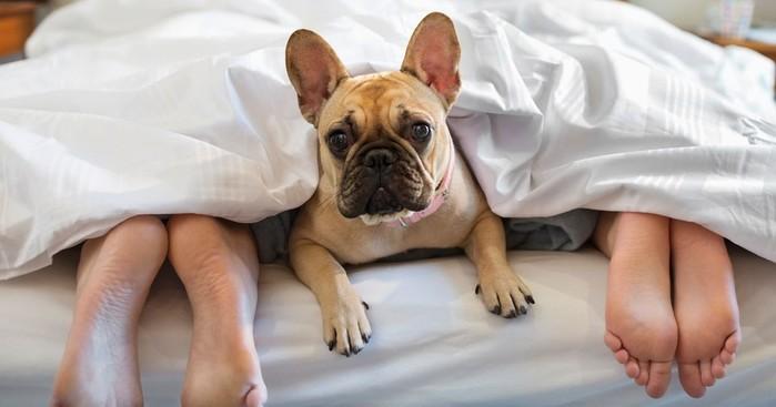 Как домашние питомцы влияют на сон хозяев