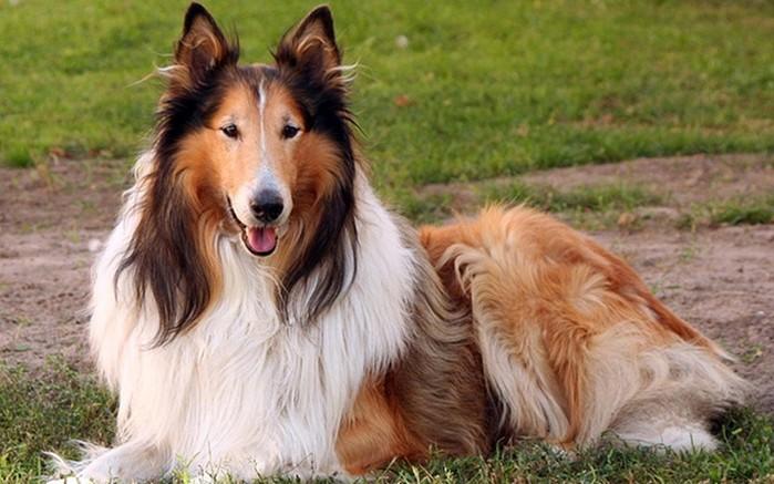 Какие породы собак самые преданные? Топ 10 пород