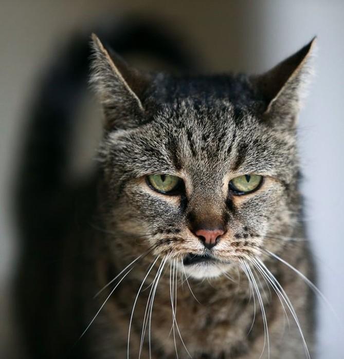 Когда умер самый старый кот в мире