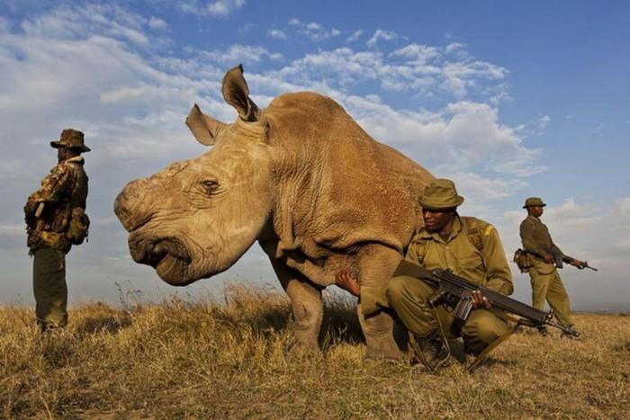 «Фотографирование крупных зверей» (Джон Хантер)