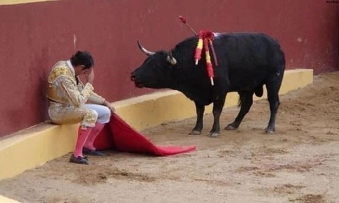 Раскаяние матадора посреди боя быков