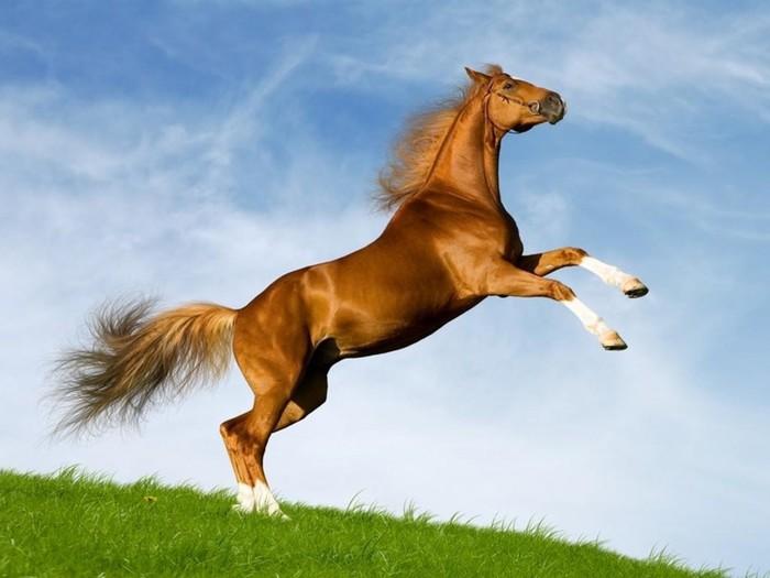 Интересные факты о лошадях (для детей и взрослых)