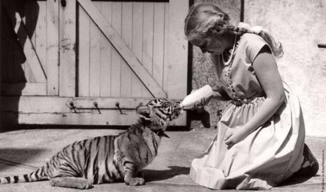 Дружба животных и людей на фотографиях 19 века