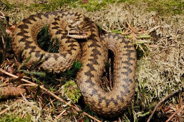 Смертельная фауна России: самые опасные животные
