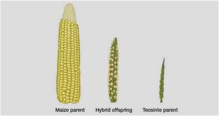 Овощи и фрукты, которые генетики изменили до неузнаваемости