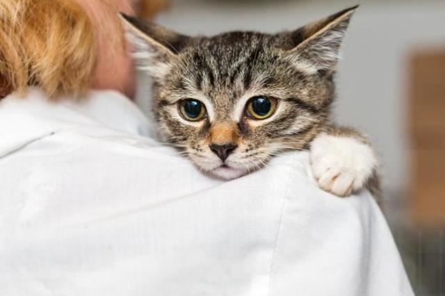 Что делать если кошка загуляла?