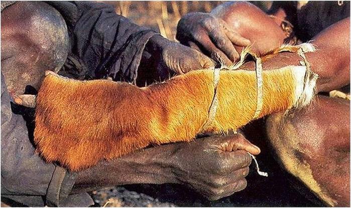 Как ловят питонов? Фотографии охоты на змей в Африке