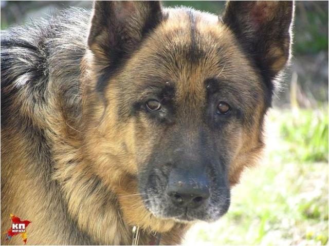 Спустя семь лет разлуки они нашли своего пса
