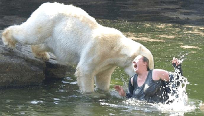 Жуткие фотографии нападения медведей, которые кажутся такими милыми мишками