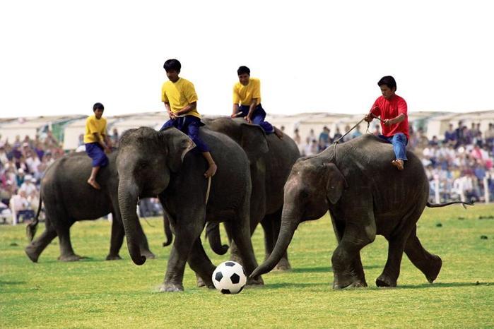 Футбольный матч и другие нелепые поводы для начала войны