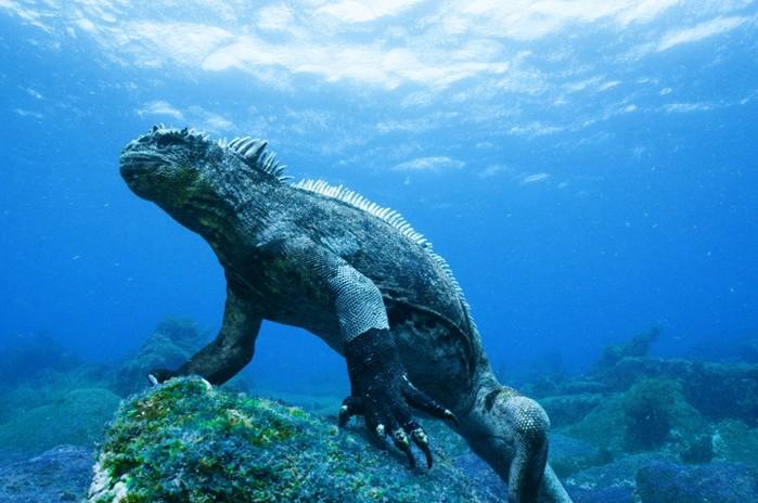 Фотографии сухопутных животных, которые застигнуты за плаванием