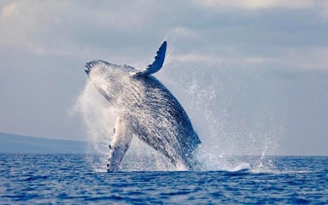 10 секретов живой природы, которые ученым пока не раскрыли