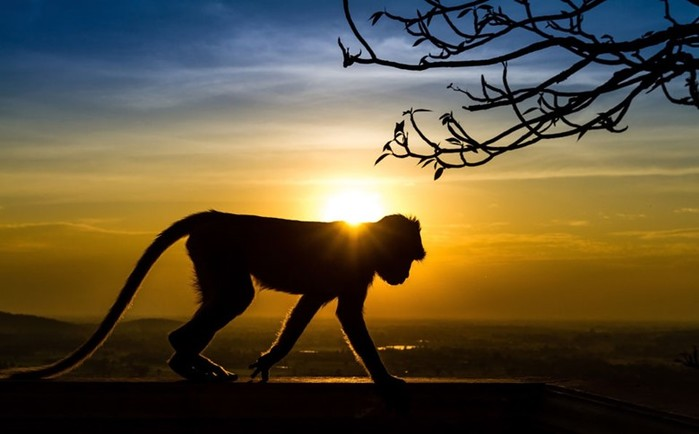 Необычные случаи спаривания у млекопитающих