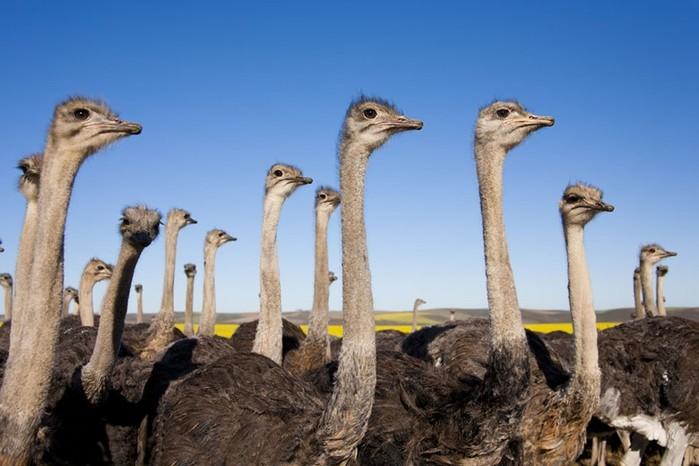 Приемы привлечения противоположного пола у птиц