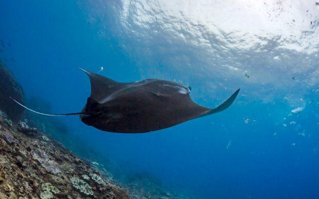 Пластиковое торнадо: большая экологическая проблема в океане