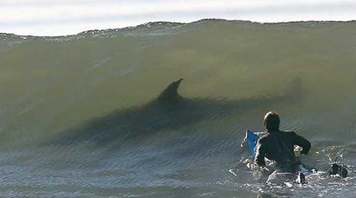 Фотографии, которые заставляют панически бояться моря